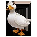 American Pekin Duck