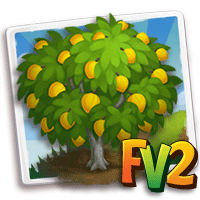 Eggfruit Tree