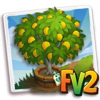Elder Eggfruit Tree