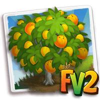 Heirloom Eggfruit Tree