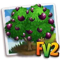 Heirloom Star Apple Tree