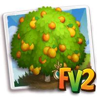 Heirloom Fukushu Kumquat Tree