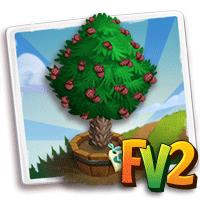 Elder Monkey-Puzzle Tree